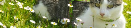 cat_in_flower_garden.jpg